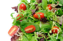 Green salad and tomatoes Stock Photos