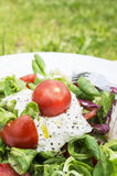 Green salad with tomatoes on grass Stock Photography