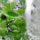 Green salad in the water Stock Image