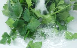 Green salad in the water Stock Images