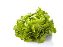 Green salad on white background Royalty Free Stock Images