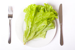 Green salad on white plate Stock Photo