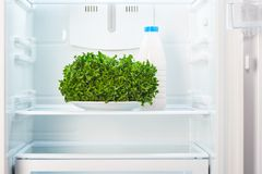 Green salad on white plate and a glass bottle of yoghurt in open empty refrigerator Royalty Free Stock Images