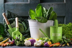 Green salads, cabbage, colorful veggies Stock Photo