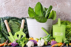 Green salads, cabbage, colorful veggies Royalty Free Stock Photos