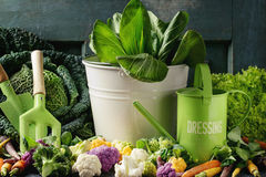 Green salads, cabbage, colorful veggies Royalty Free Stock Photo