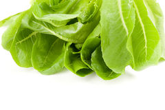 Green salads leaves Royalty Free Stock Photos