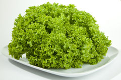 Green Salat Royalty Free Stock Photography