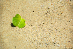 Green and sand. A green leaf in the sand Stock Images
