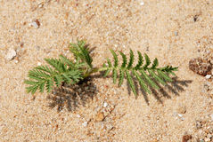 Green in Sand. A plant in the sand Stock Image