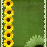 Green sanflowers backgound Royalty Free Stock Photos