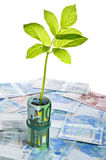 Green sapling growing from euro banknotes Stock Photo