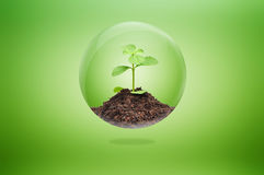 Green sapling with soil inside glossy ball Stock Photos