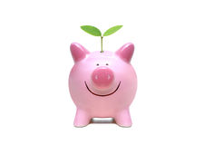 Green saving. A pink piggy bank with a green plant / Green saving concept / Economic growth with environmental concern royalty free stock image