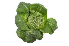 Green Savoy cabbage Royalty Free Stock Image