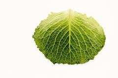 A green savoy leaf with withe background. Indoor shooting. Foodphotography Stock Photos
