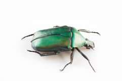 Green scarab Royalty Free Stock Image