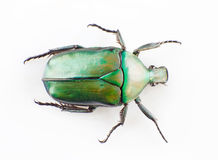 Green scarab Royalty Free Stock Photography