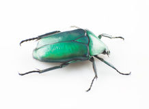 Green scarab Royalty Free Stock Photo