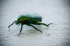 Green scarab Stock Photo