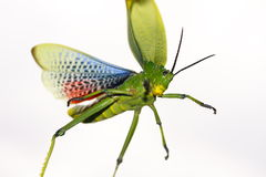 Green scary bug royalty free stock photography