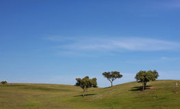 Green scenery. Spring time landscape; picture taken in the Portuguese countryside Royalty Free Stock Photo