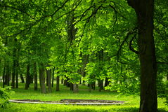 Green Scenery in Kadrioru Park royalty free stock photo