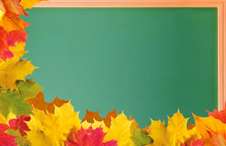 Green school blackboard with autumn leaves Royalty Free Stock Images