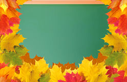 Green school blackboard with autumn maple leaves Royalty Free Stock Photography