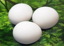 Green screen chicken eggs Royalty Free Stock Photos