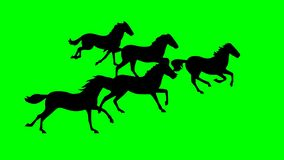Green screen hordes of many running horses. Looping say runing vector illustration