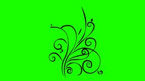 Green screen. plant line grows. moving lines grow. animated graphics vines theme. stock illustration