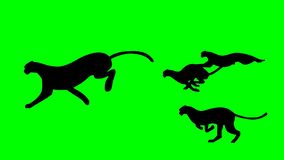 Green screen some animals say run. Looping. Vector stock illustration
