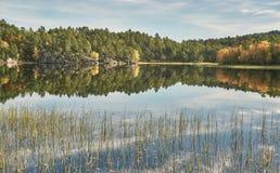 Green scrubs on Norwegian lake Royalty Free Stock Image