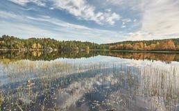 Green scrubs on Norwegian lake Royalty Free Stock Photos