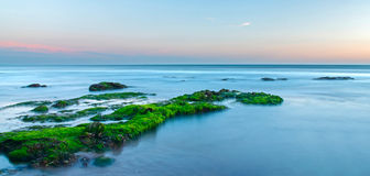 Green sea algae. Growing on rocks in this sunset seascape royalty free stock images
