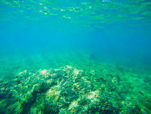 Green sea floor in Sardinia Stock Photography