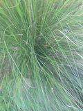 Green sea grass Stock Images