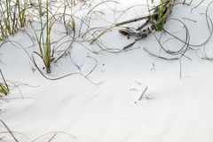 White Sand Beach Pensacola Florida with Sea Grass. Green sea grass and wooden branches on white sand in Pensacola, Florida 2018 Stock Images