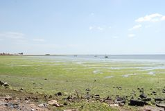 Flowering green sea in Tunisia Royalty Free Stock Photography