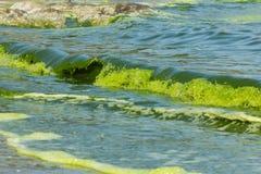 Green Sea  luminescence. Green Sea luminescence. Illumination of plankton at Bang-saen Chon buri Royalty Free Stock Photos