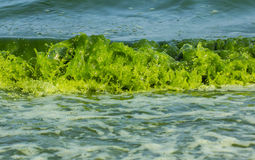 Green Sea  luminescence. Stock Photography