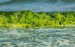 Green Sea  luminescence. Green Sea luminescence. Illumination of plankton at Bang-saen Chon buri Stock Photography