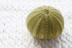 Green sea Shell 1 Royalty Free Stock Images