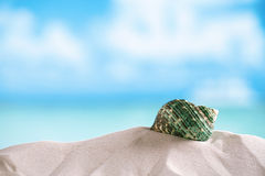 Green sea  shell on white Florida beach sand under the sun light Royalty Free Stock Image