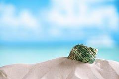 Green sea  shell on white Florida beach sand under the sun light. Green shell on white Florida beach sand under sun light, shallow dof Royalty Free Stock Image