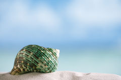 Green sea  shell on white Florida beach sand under the sun light. Green shell on white Florida beach sand under sun light, shallow dof Stock Images