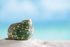 Green sea  shell on white Florida beach sand under the sun light Royalty Free Stock Photos