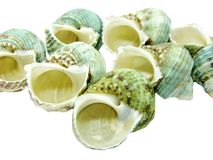Green sea shells Royalty Free Stock Photos