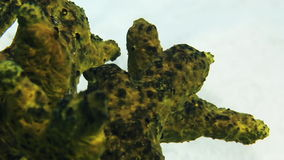 Green sea sponge coral in Bahamas. Close-up stock footage